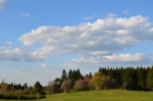 Paysage paisible, ciel bleu et nuage, forêt de conifères au loin.
