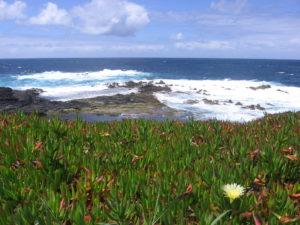 Sérénité, photo du bord de mer et plantes grasses au premier plan - Açores. Rentrée Pilates 2018